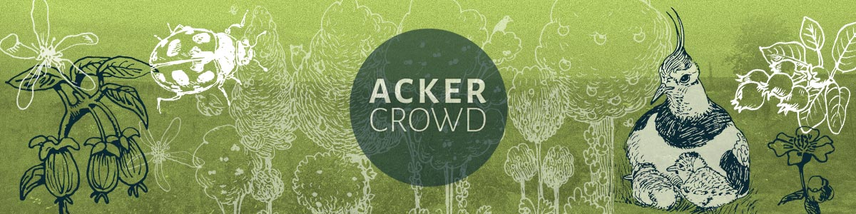 ackercrowd-header-main